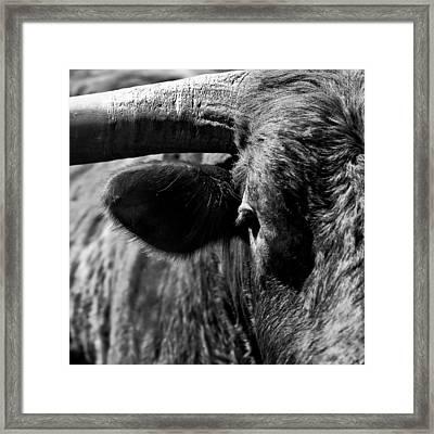 Texas Longhorn Bulls Eye Framed Print by  Onyonet  Photo Studios