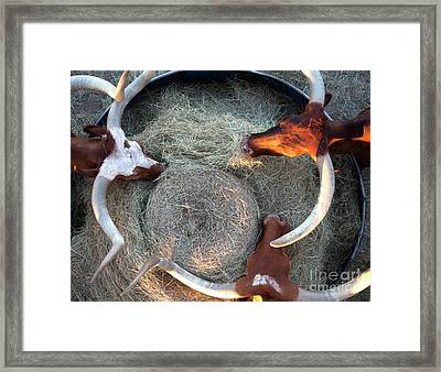 Texas Longhorn Cattle, Ft. Worth Stockyards Framed Print by Greg Kopriva