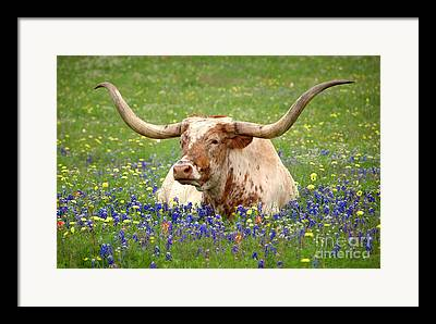 Texas Hill Country Landscape Framed Prints