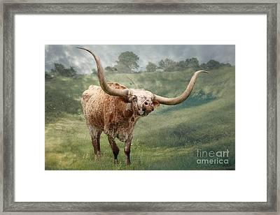 Texas Longhorn - Pride Framed Print