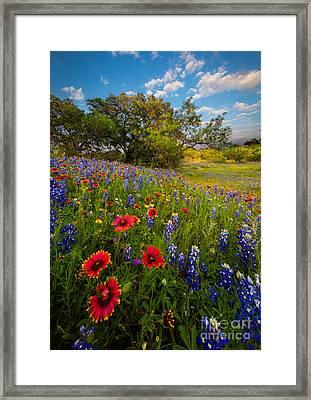 Texas Paradise Framed Print by Inge Johnsson
