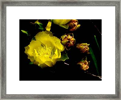 Texas Rose Vi Framed Print by James Granberry