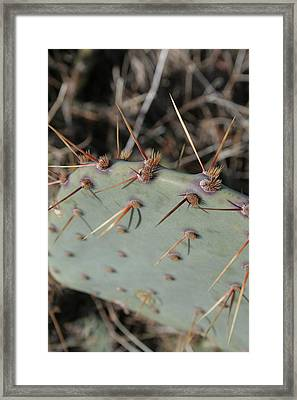 Framed Print featuring the photograph Texas Spikes by Laddie Halupa