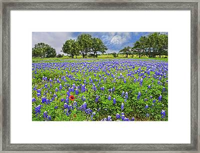 Texas Spring  Framed Print