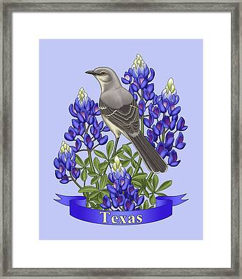 Texas State Mockingbird And Bluebonnet Flower Framed Print