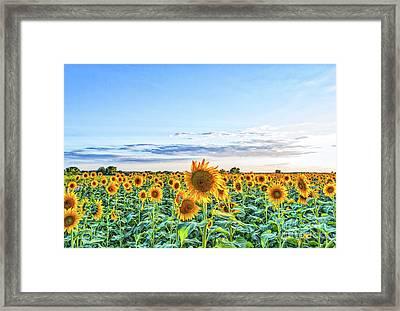 Texas Sunflowers Farm Framed Print