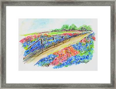 Texas Wild Flowers Framed Print by Clyde J Kell