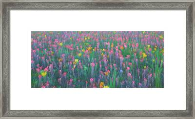 Texas Wildflowers Abstract Framed Print