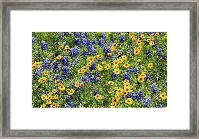 Texas Wildflowers Framed Print by Stephen Stookey