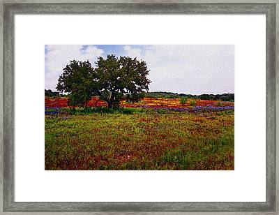 Texas Wildflowers Framed Print by Tamyra Ayles