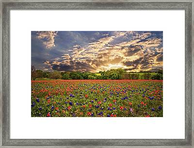 Texas Wildflowers Under Sunset Skies Framed Print