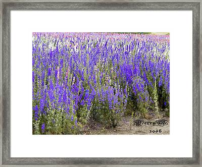 Texas Wildseed Farm Framed Print