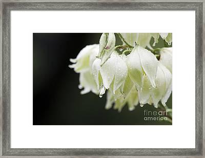 Texas Yucca Framed Print