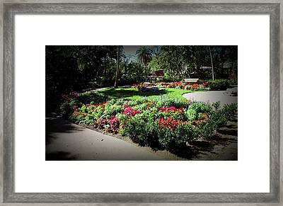 Framed Print featuring the photograph Texture Drama Garden Park by Aimee L Maher Photography and Art Visit ALMGallerydotcom