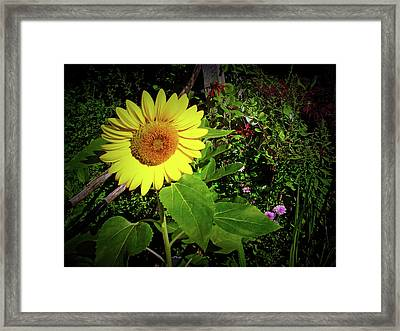 Framed Print featuring the photograph Texture Drama Garden Sunflower by Aimee L Maher Photography and Art Visit ALMGallerydotcom