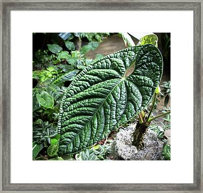 Texture Of A Leaf Framed Print