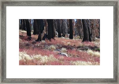 Texture Of Recovery Framed Print