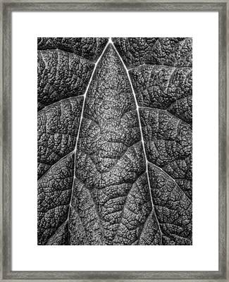 Framed Print featuring the photograph Texture by Rand
