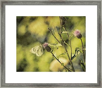 Textured Butterdly  Framed Print by Leif Sohlman