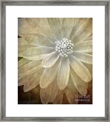 Textured Dahlia Framed Print by Meirion Matthias