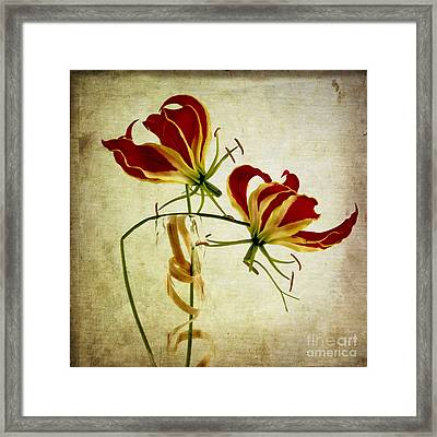 Textured Gloriosa Lily. Framed Print