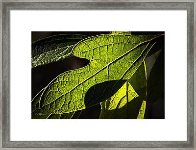 Textured Glow Framed Print by Christopher Holmes