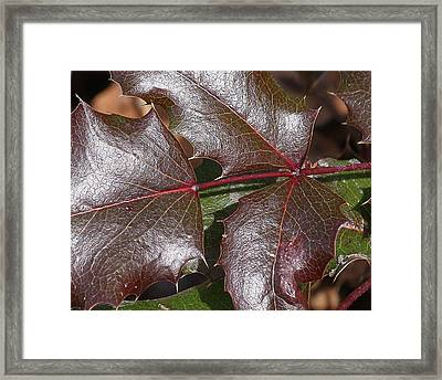 Framed Print featuring the photograph Textured Leaves by Doris Potter