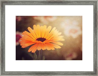 Textured Marigold Framed Print