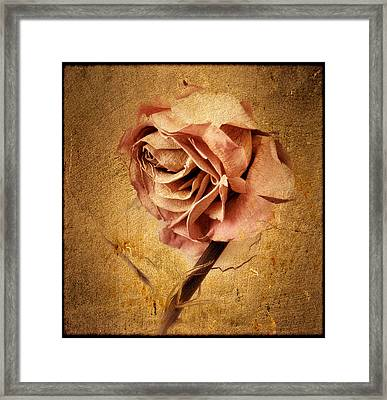 Textured Rose Framed Print by Jessica Jenney