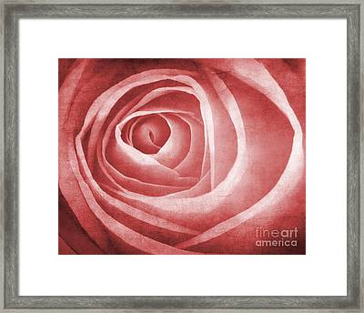 Textured Rose Macro Framed Print by Meirion Matthias