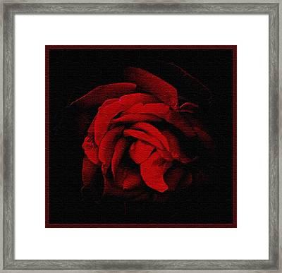 Textured Rose Framed Print by Russ Mullen