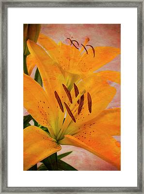 Textured Tiger Lily Framed Print