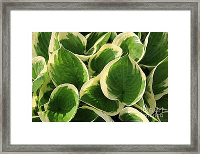 Textures In Leaves Framed Print by Marilyn Carlyle Greiner
