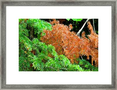 Textures Of A Tree Framed Print by Gary Smith