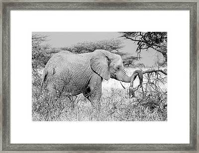 Tgif Framed Print by Chris Scroggins