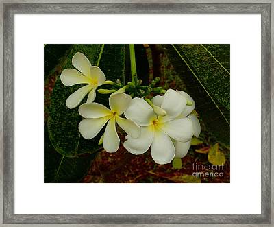 Thai Flowers II Framed Print by Louise Fahy