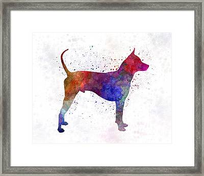 Thai Ridgeback Dog In Watercolor Framed Print by Pablo Romero