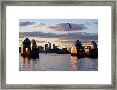 Thames Barrier And Seagulls Framed Print