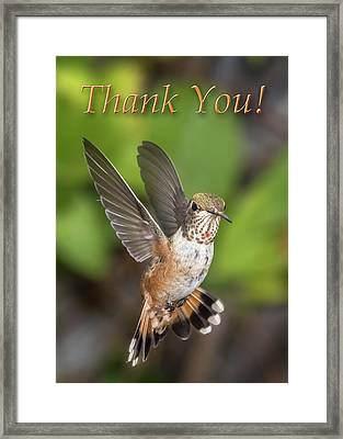 Thank You - Female Rufous Hummingbird  Framed Print