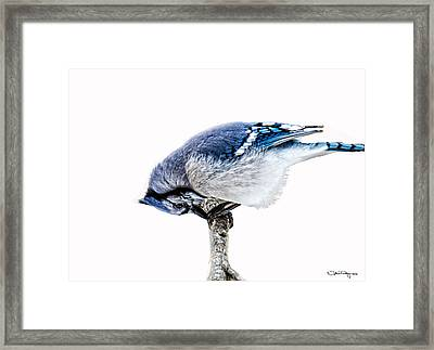 Thank You For This Food Framed Print by Skip Tribby