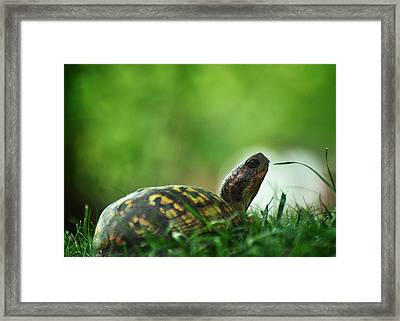 Thankful For Leaping Greenly Spirits Framed Print