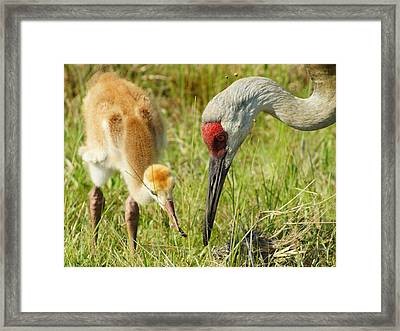 Framed Print featuring the photograph Thanks Mom by Lynda Dawson-Youngclaus