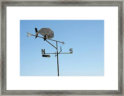 Thar She Blows Framed Print by Joseph Castiglioni