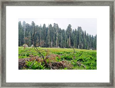 Framed Print featuring the photograph Tharps Log Meadow by Kyle Hanson