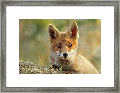 That Face - Cute Fox Kit Framed Print