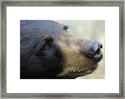 That Face Framed Print by Karol Livote