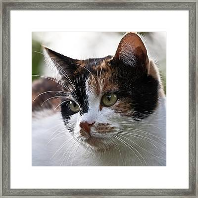 That Is Lolle Framed Print by Heiko Koehrer-Wagner