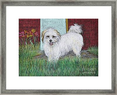 That Little White Dog Framed Print by Reb Frost
