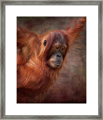 That Look Framed Print by Heather Thorning