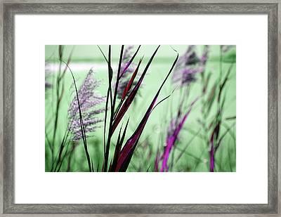 That Magic Color  Framed Print by Susanne Van Hulst